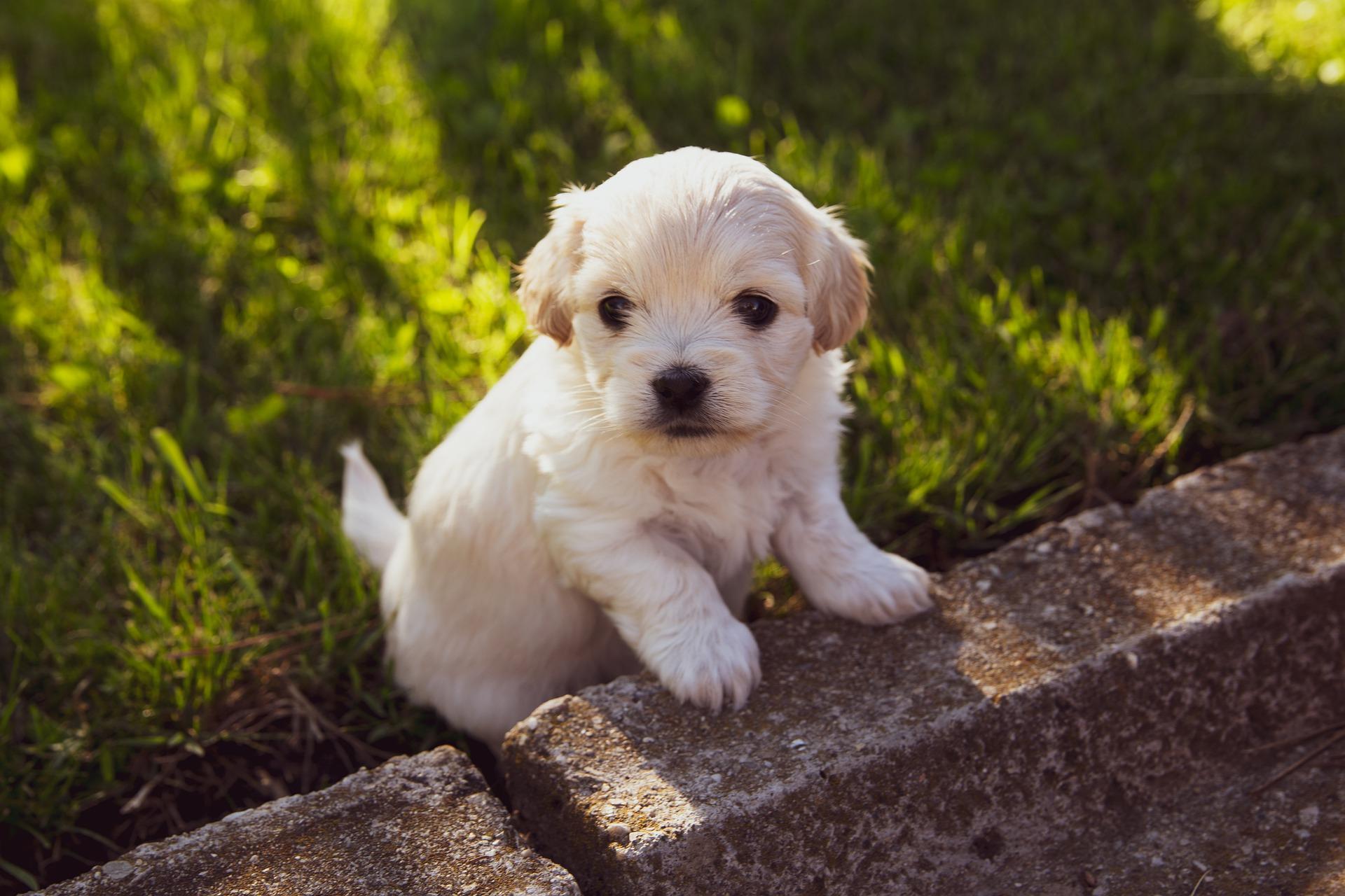 Forfait chiot - éducation canine - Fontaine du Page