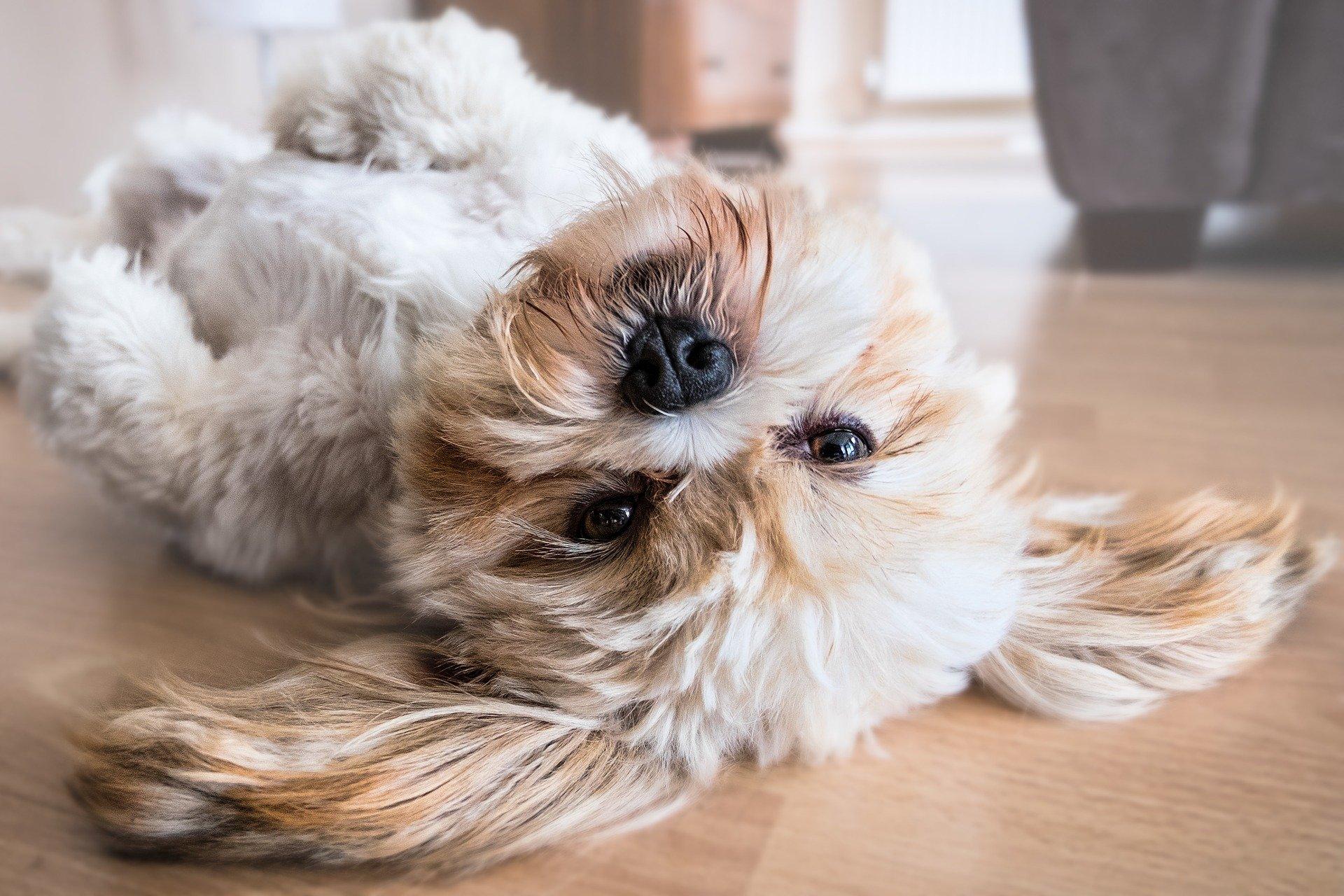 Séance comportementale canine - Fontaine du Page